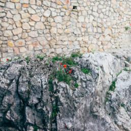 Csókakő vára, pipacsok a sziklán